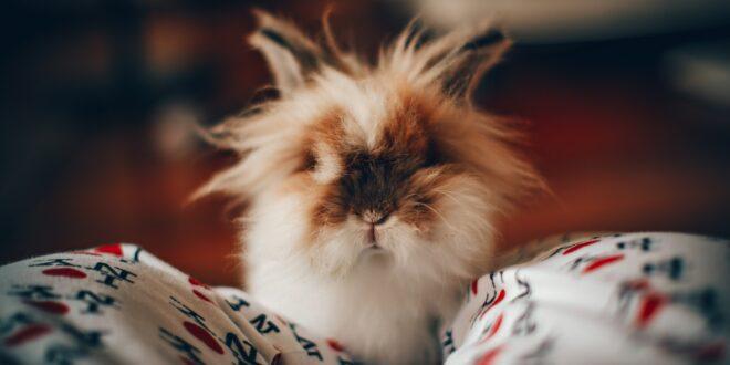 hold en fest for din kanin